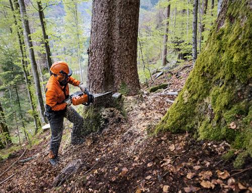 Motorsägenkurs für alle Waldarbeiter und Brennholzmacher!